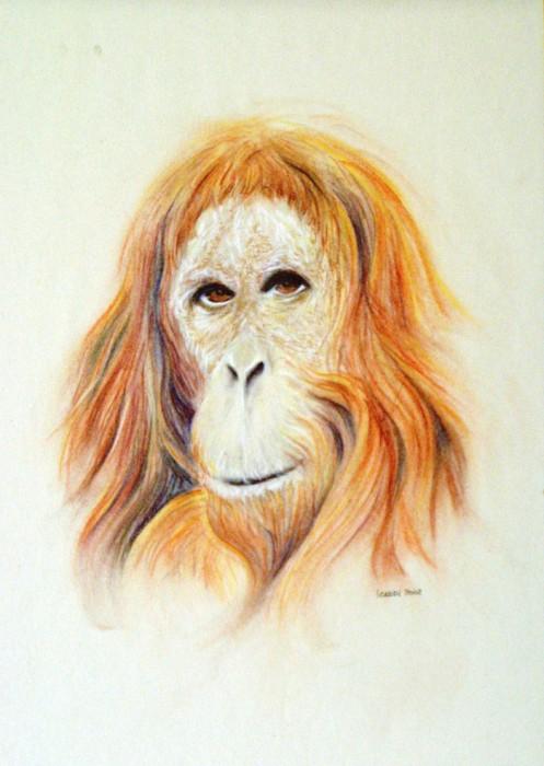 Orango - Matita 34x49 (2002)